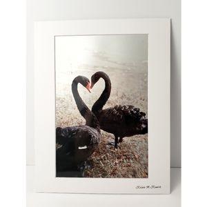 Black Swan Heart Photography Print
